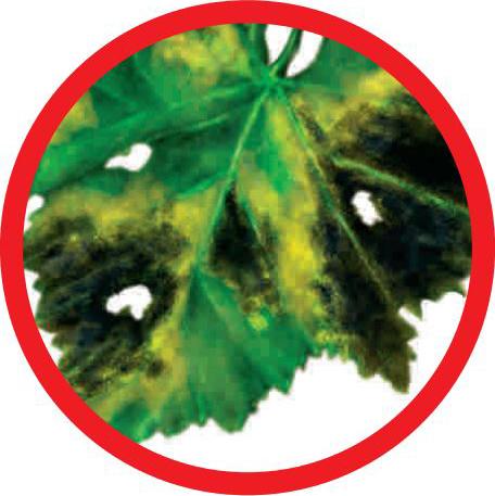 control hongo moteado plantas jardin